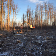 Timber! The biomass energy harvest around Galena has begun